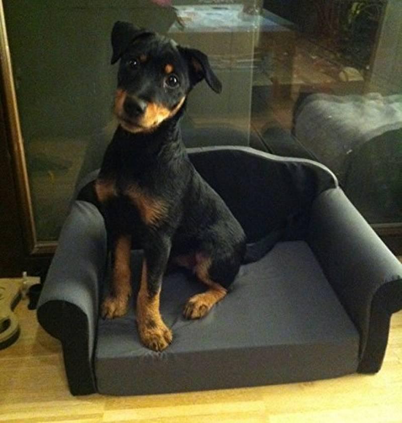 canap et fauteuil pour chien comment trouver les meilleurs mod les pour 2018 meilleurs. Black Bedroom Furniture Sets. Home Design Ideas