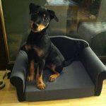 Canapé pour chien / canapé pour chat, dépliable, panier pour chien de la marque SAUERLAND image 2 produit