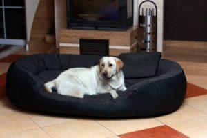 Canapé pour gros chien ; top 6 TOP 4 image 0 produit