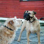 Corbeille pour gros chien : votre top 12 TOP 1 image 5 produit