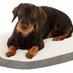 Coussin orthopédique chien ; votre top 14 TOP 9 image 1 produit