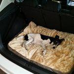 Coussin pour chien XL ultra-épais, aspect tweed, 100x70 cm, panier pour chien lavable de la marque SAUERLAND image 2 produit