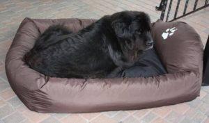 Fauteuil pour grand chien ; le top 12 TOP 10 image 0 produit