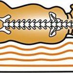 Knuffelwuff lit pour chien orthopédique Jessy S-M 73 x 50cm beige de la marque Knuffelwuff image 2 produit
