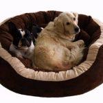 Lit canapé chien ; faire une affaire TOP 1 image 5 produit