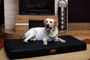 Matelas mémoire de forme chien - trouver les meilleurs modèles TOP 11 image 0 produit