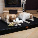 Matelas mémoire de forme chien - trouver les meilleurs modèles TOP 11 image 3 produit