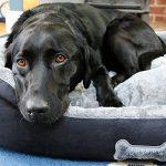 Me & My Pets Panier pour chien super doux Grand Gris/noir de la marque Me & My Pets image 2 produit
