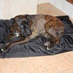Panier/Matelas pour chien imperméable 105x70 noir de la marque ETS image 3 produit