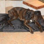 Panier/Matelas pour chien imperméable 105x70 noir de la marque ETS image 4 produit