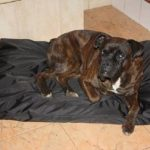 Panier/Matelas pour chien imperméable 105x70 noir de la marque ETS image 5 produit