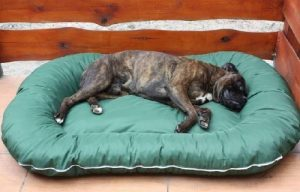 Panier pour chien 140x95x17 couverture déhoussable vert de la marque ETS image 0 produit