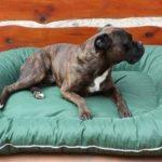 Panier pour chien 140x95x17 couverture déhoussable vert de la marque ETS image 3 produit