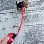 Panier pour chien rouge - acheter les meilleurs produits TOP 8 image 4 produit