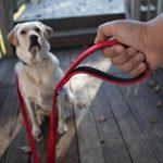 Panier pour chien rouge - acheter les meilleurs produits TOP 8 image 5 produit