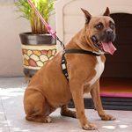 Panier rose pour chien - faites des affaires TOP 3 image 3 produit