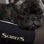 Scruffs panier chien - top 12 TOP 0 image 6 produit