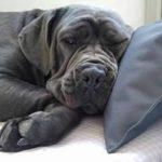 tierlando G5-L-03 Lit Orthopédique Pour Chien GOOFY VISCO Anti-cheveux Similicuir Canapé pour chien Panier pour chien Gr. XL 120cm Noir Ortho de la marque tierlando image 4 produit