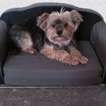 Canapé pour chien / canapé pour chat, dépliable, panier pour chien de la marque SAUERLAND image 3 produit