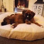 Coussin rond chien, le top 10 TOP 0 image 1 produit