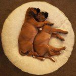 Coussin rond chien, le top 10 TOP 0 image 4 produit