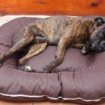 Panier pour chien couverture déhoussable 120x90x17 brun de la marque ETS image 0 produit