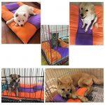 Sild Double Tapis matelas réversible pour animaux domestiques (chiens et chats), doux et matelassé, différentes tailles de la marque SILD image 4 produit